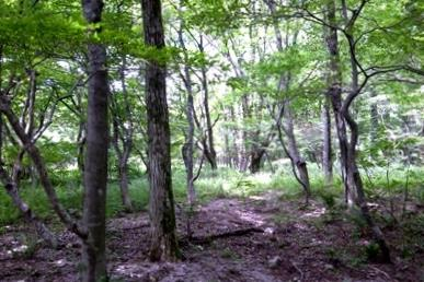 三瓶山自然林は森林浴の森百選で...