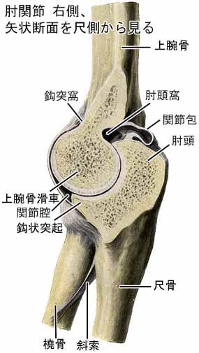 肘関節不安定性を伴う肘頭骨折の手術治療経験